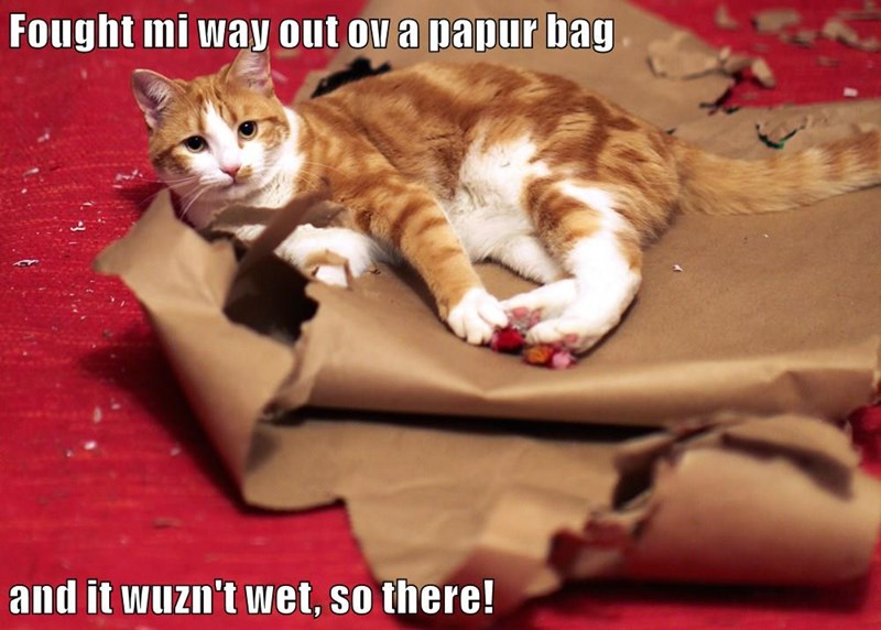 Fought mi way out ov a papur bag  and it wuzn't wet, so there!
