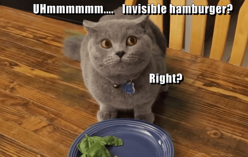 animals cat invisible caption hamburger - 8803130368