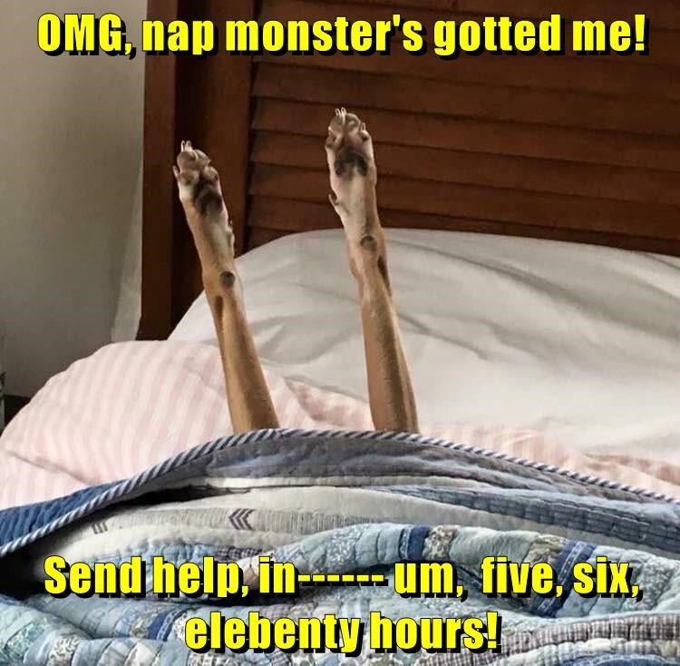 animals dogs nap send me help gotted caption monster - 8803155712