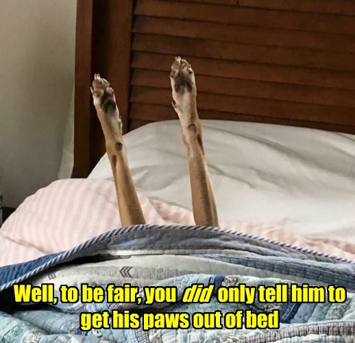 paws,dogs,bed,out of,only,fair,him,caption,tell
