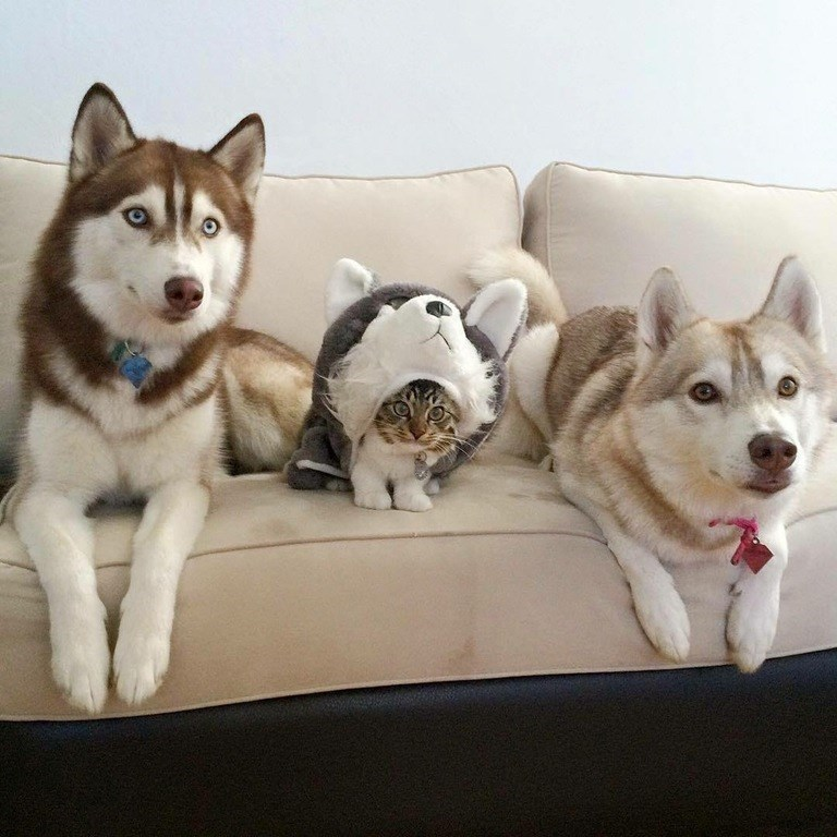 day 53 they still think im a dog