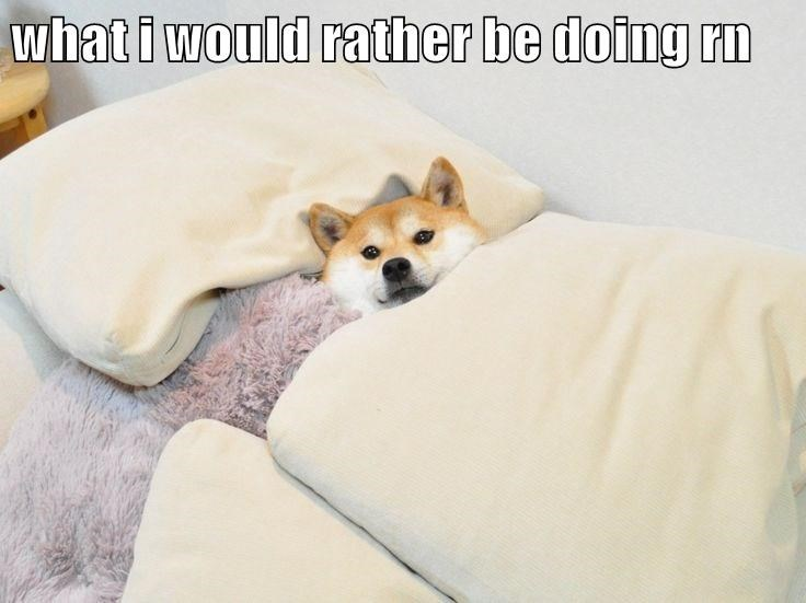 dogs,bed,caption,shiba inu