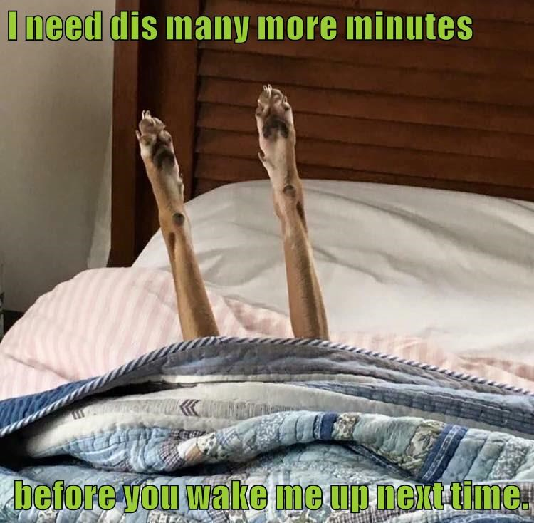 paws,dogs,minutes,wake up,bed,caption