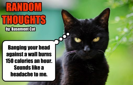 basement cat headache thoughts random caption Cats - 8803312896