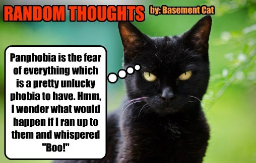 basement cat thoughts random boo phobia caption Cats - 8803317248