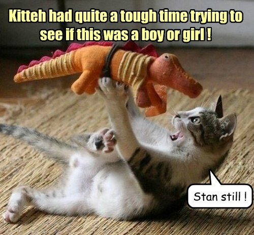 boy cat time see tough caption girl - 8803319808