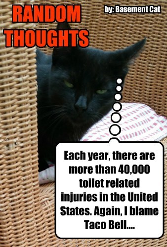 Each year, there are more than 40,000 toilet related injuries in the United States. Again, I blame Taco Bell.... RANDOM THOUGHTS by: Basement Cat
