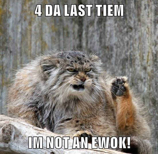 animals cat nerds zoo ewok caption - 8803325184