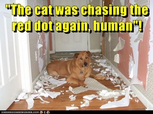 """The cat was chasing the red dot again, human""!"