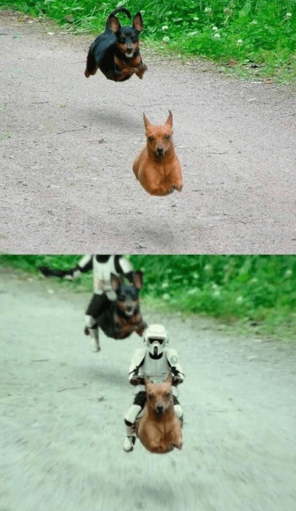 funny-what-if-stormtroopers-raced-on-wiener-dogs