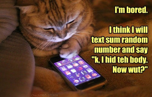 cat random text hid bored body caption