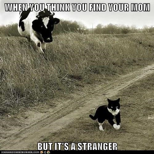 animals cow stranger caption mom Cats - 8803353344