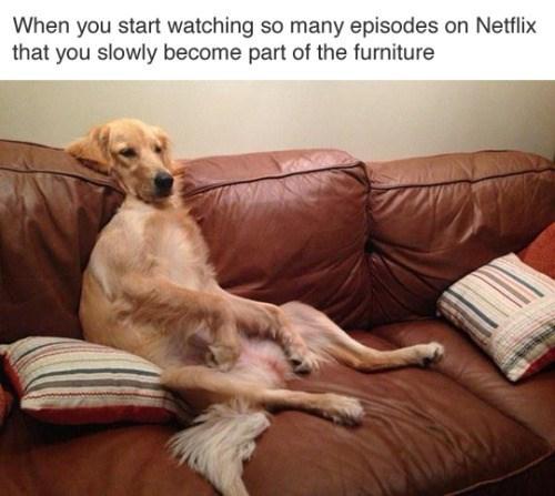 image memes netflix Netflix and Melt