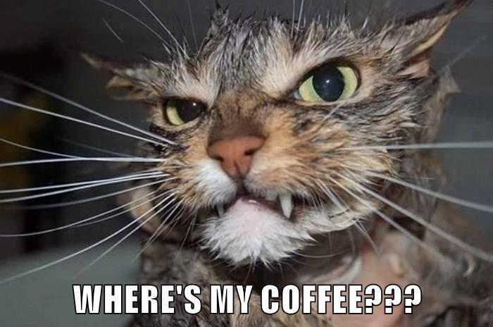 animals coffee caption Cats - 8803425024