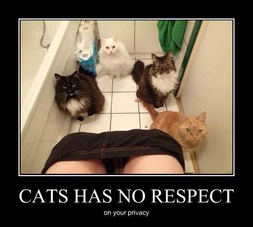 CATS HAS NO RESPECT