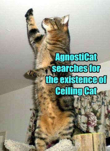 Ceiling Cat, Myth or Reality?