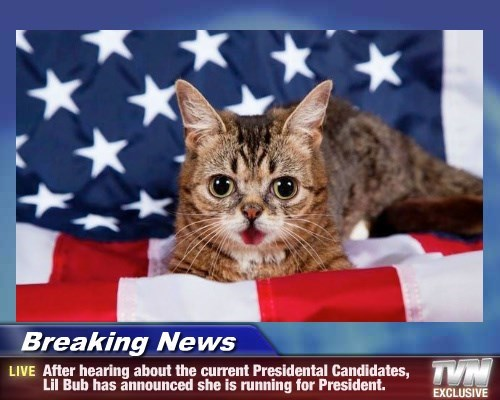 lil bub president Breaking News Cats - 8803531264
