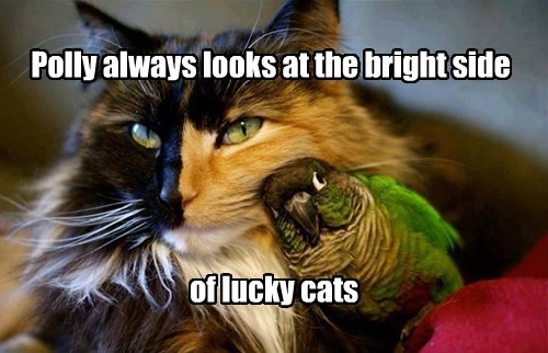 bright bird caption Cats lucky