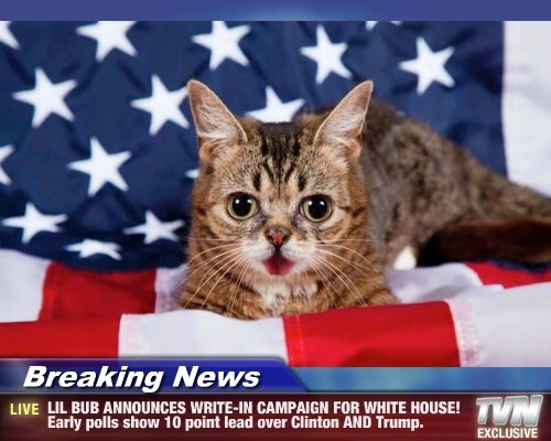 lil bub,cat,lead,polls,campaign,clinton,write in,trump,announces,early,caption