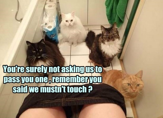 toilet paper,bathroom,toilet,caption,Cats