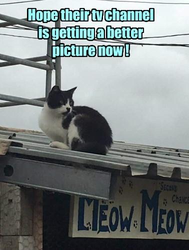roof TV caption Cats - 8803587840