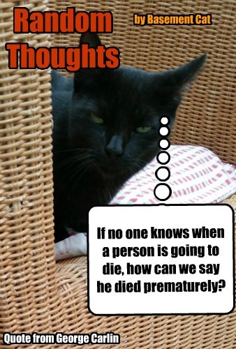 basement cat thoughts random died caption Cats - 8803594240