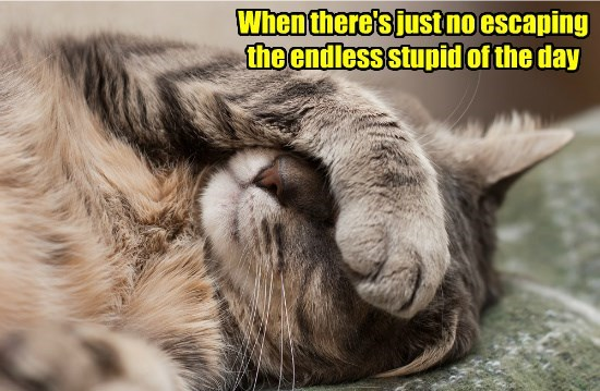 cat escaping endless day caption no stupid - 8803605760