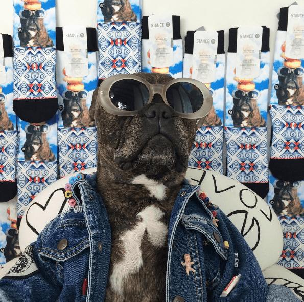 dog - Eyewear - STANCE STANCE STANCE STANCE STANCE teitHE