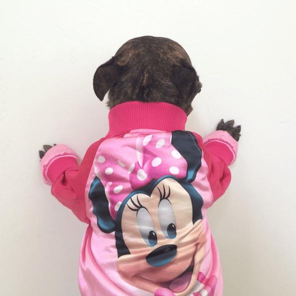 dog - Dog clothes