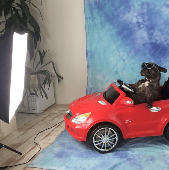 dog - Vehicle