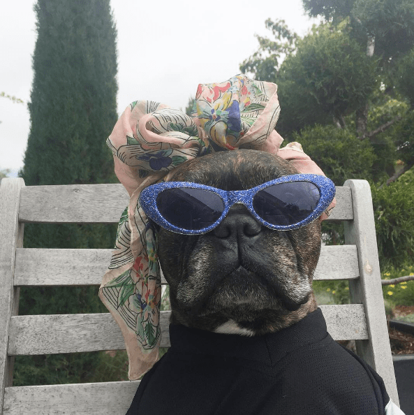 dog - Eyewear