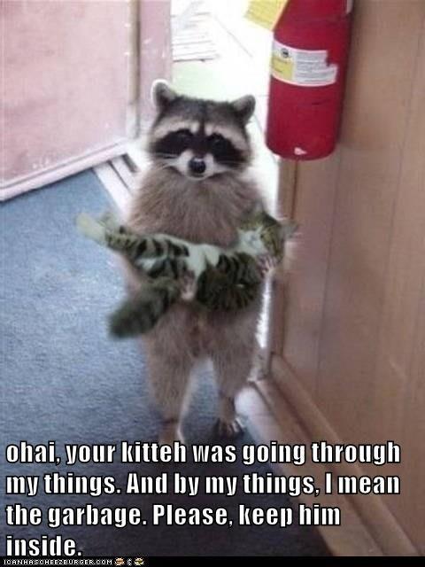 animals keep things inside garbage kitten my caption going - 8803628544