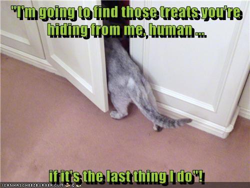 animals treats find caption Cats hiding - 8803639552