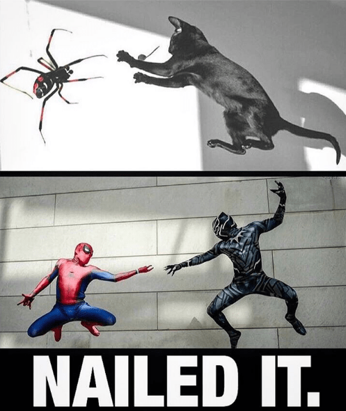 spiders,marvel,cosplay,superheroes,black panther,Spider-Man,Cats,funny