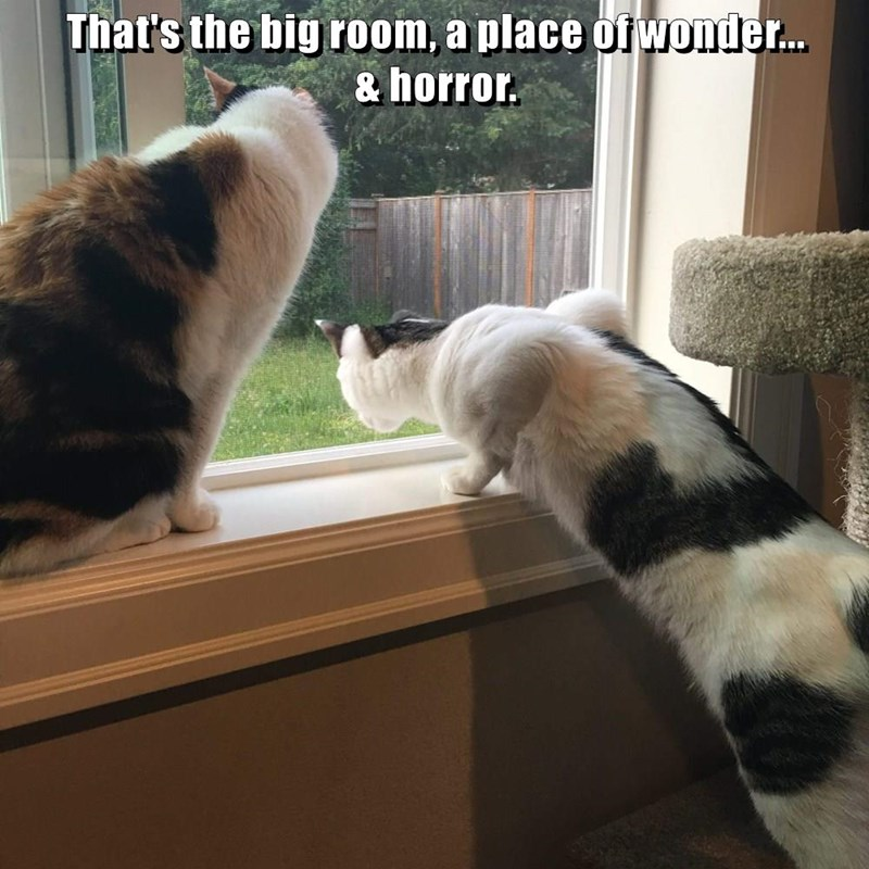 horror,room,outside,big,caption,Cats,wonder,window