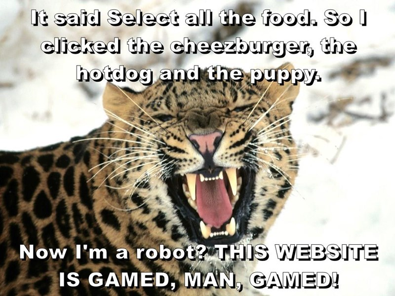 big cat,meme,food,caption