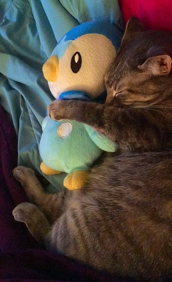 Pokémon,kitten,cute,piplup,Cats