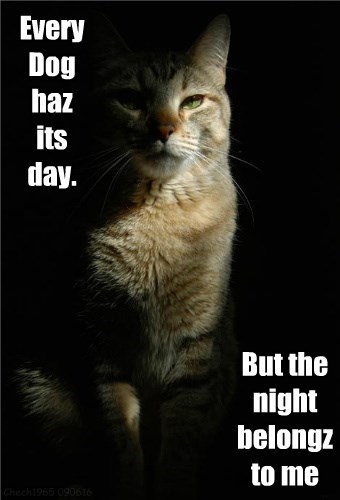 night caption Cats - 8803829248