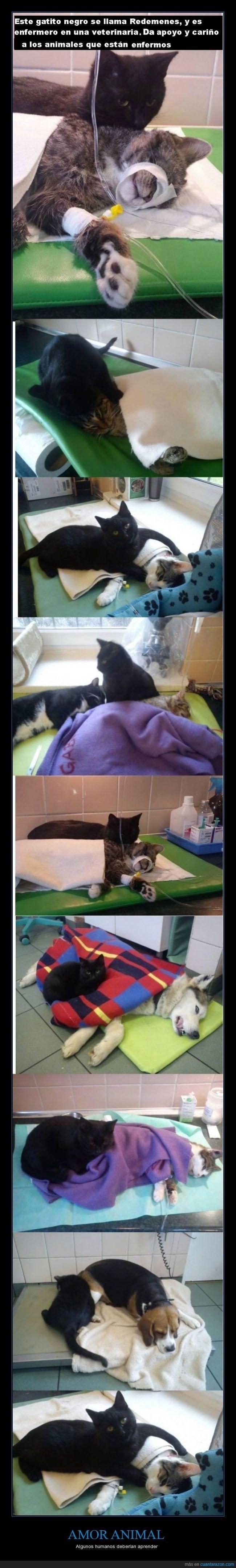 gato servicial