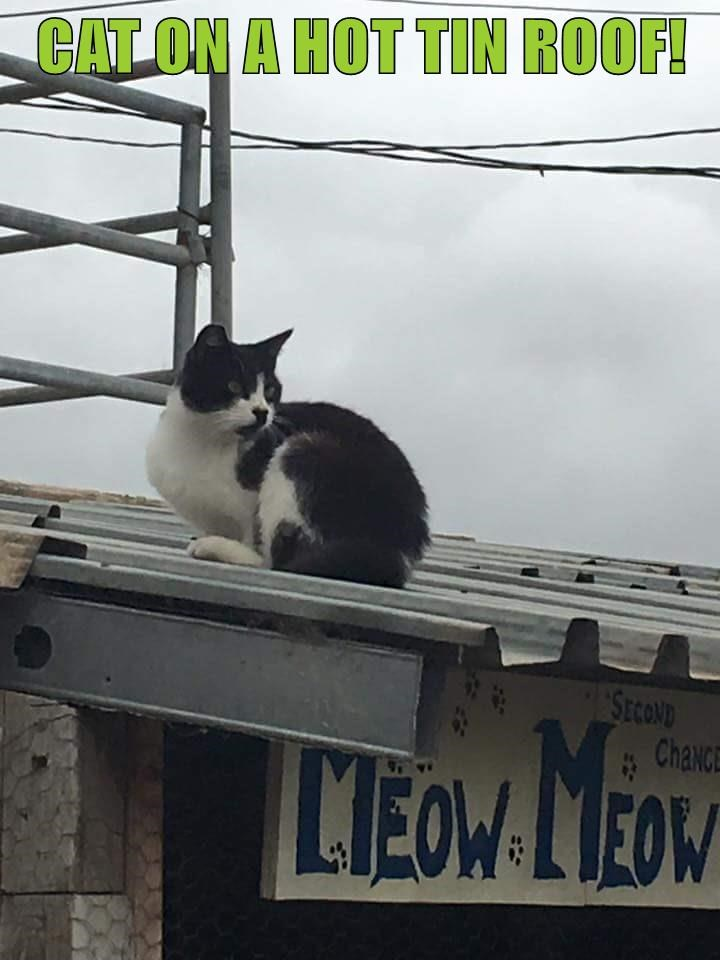 roof,meow,caption,Cats,tin