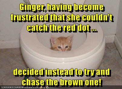Ginger, having become frustrated that she couldn't catch the red dot ... decided instead to try and chase the brown one!