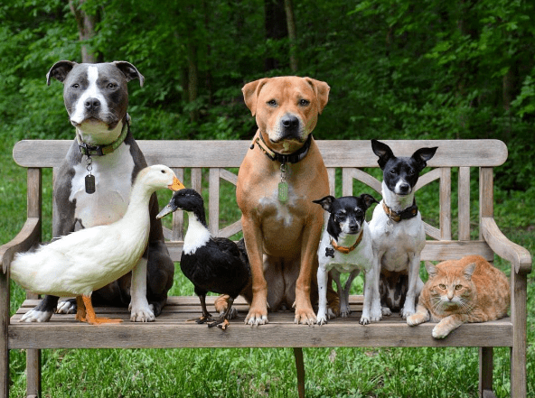dogs pack ducks cute family Cats rescue
