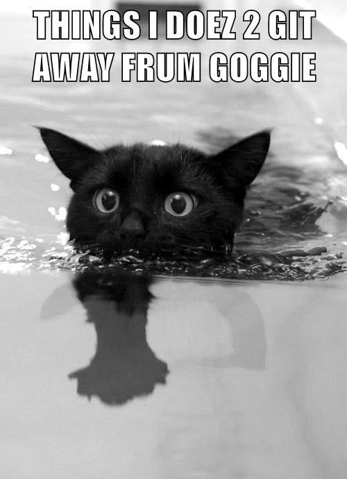 animals goggie bath get away caption Cats - 8803896576