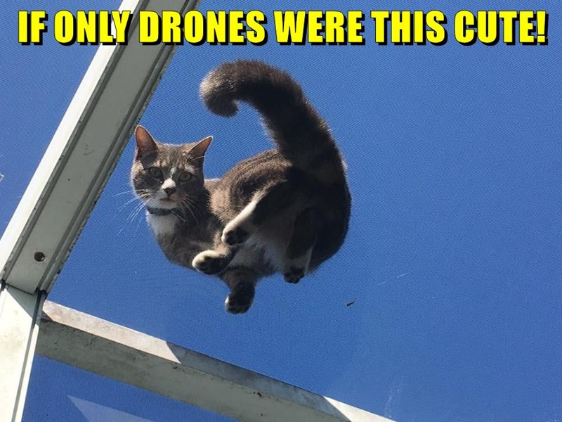 animals cute caption drones Cats - 8803897600