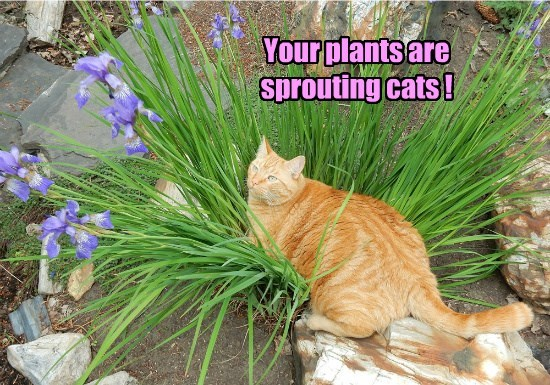 plants sprout caption Cats - 8803906560