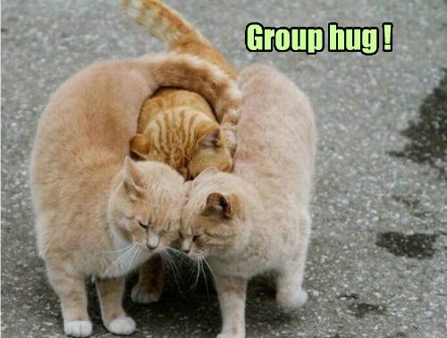 group caption Cats hug