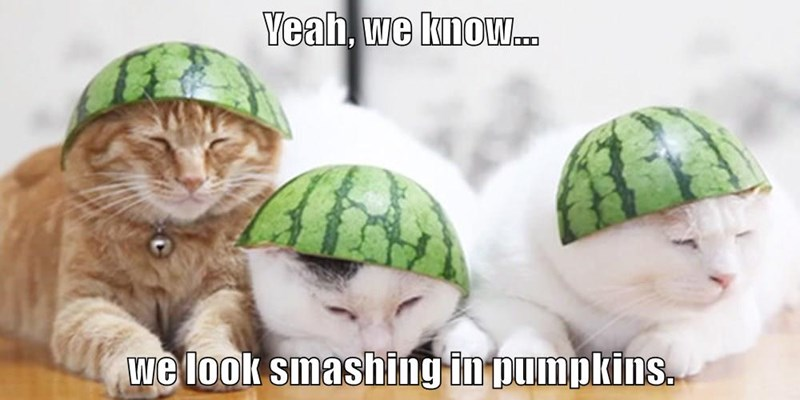 animals pumpkins watermelon smashing caption Cats