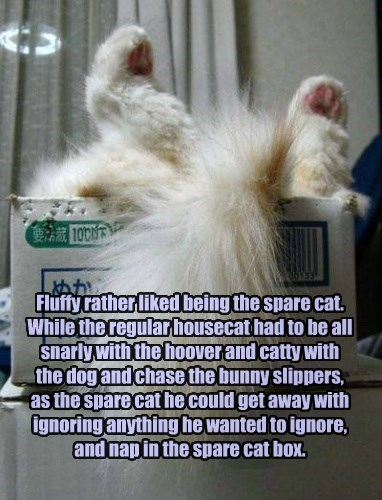 Fluffy rather liked being the spare cat.  While the regular housecat had to be all snarly with the hoover and catty with the dog and chase the bunny slippers, as the spare cat he could get away with ignoring anything he wanted to ignore, and nap in the sp