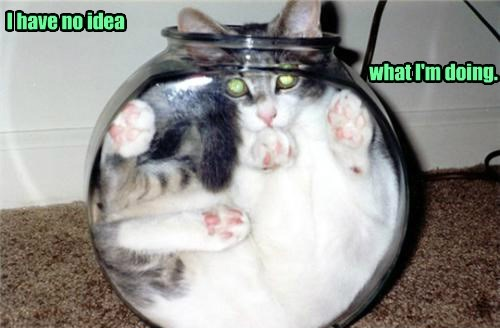 stuck,glass,caption,bowl,Cats