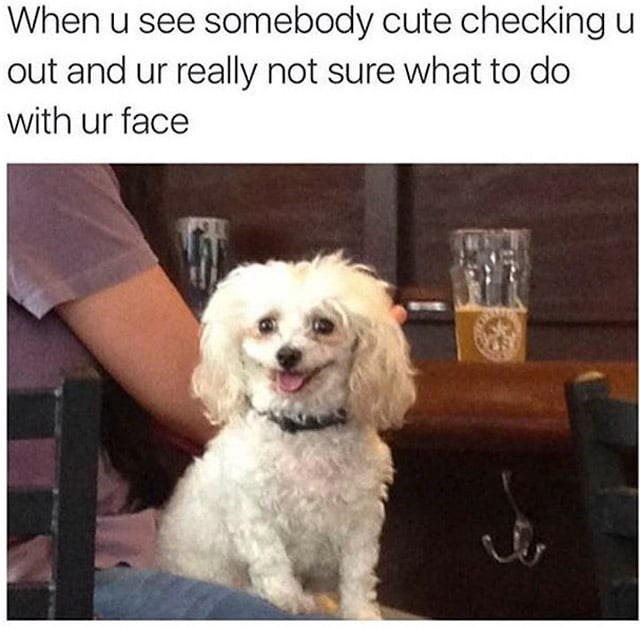 dogs Awkward dating - 8803954176